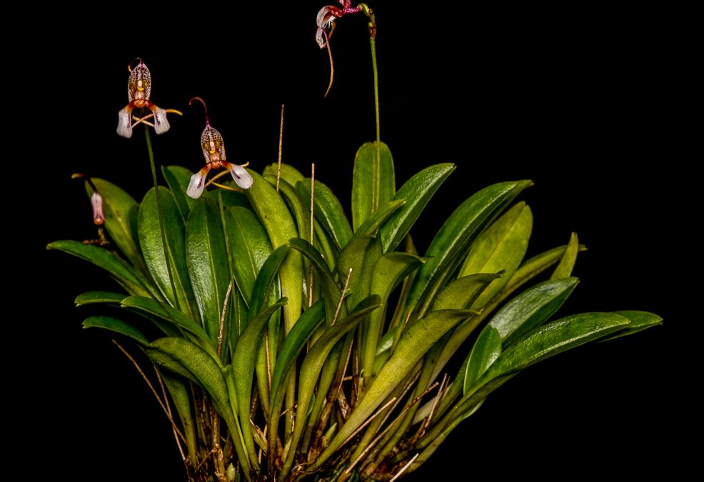 Open source monitoring systems for pollinators & orchids