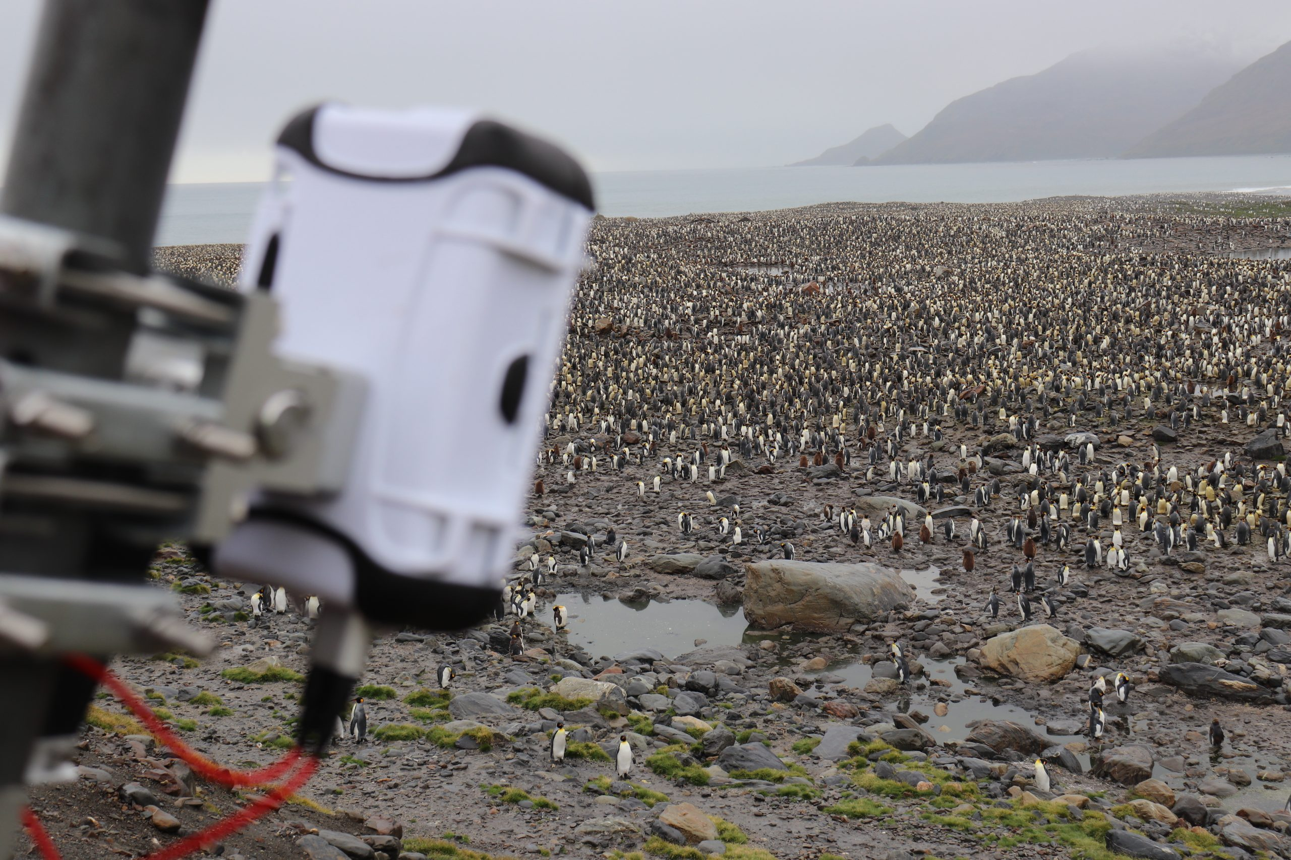 king penguins antarctica