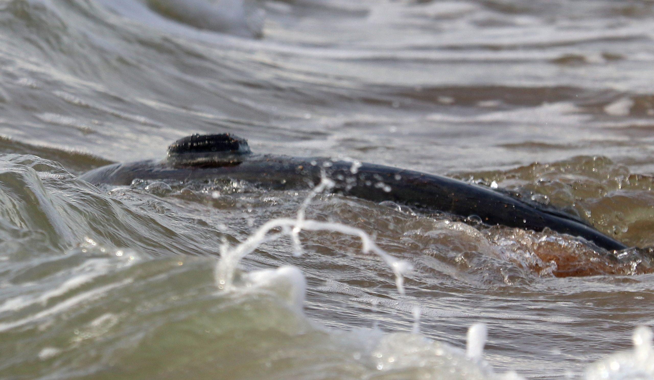 Sea turtle GPS tag